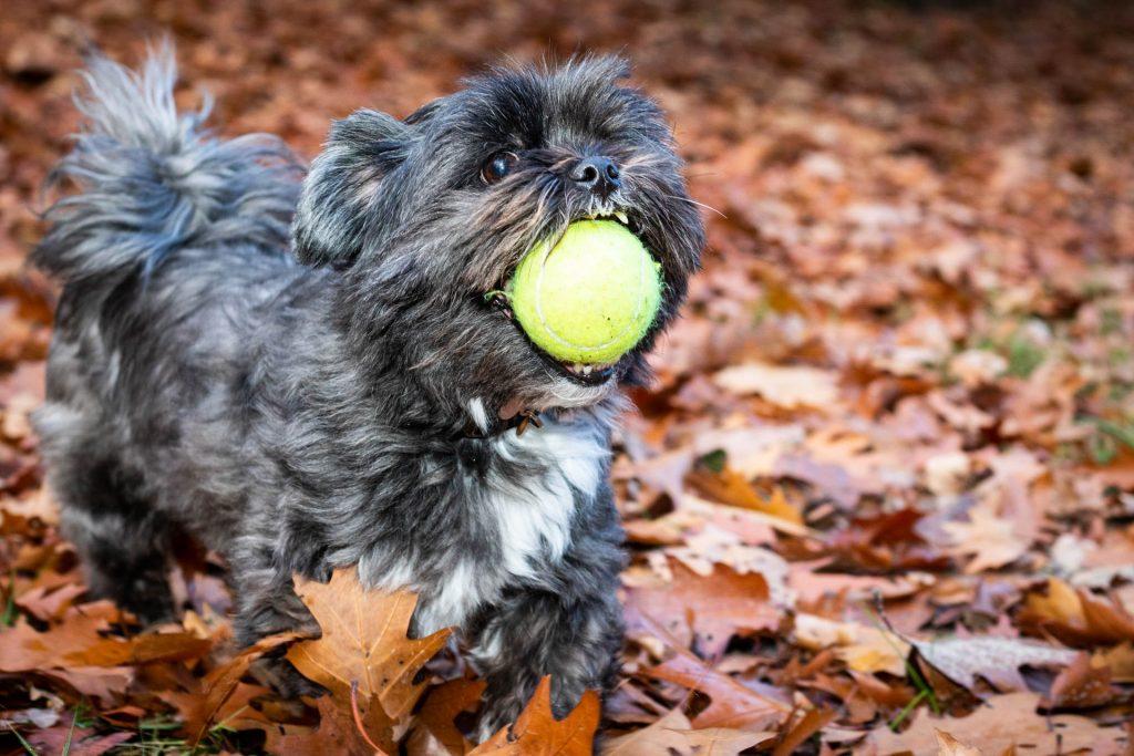 Hondenfotografie - Fam. van de Ven